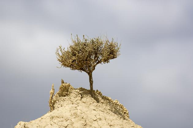 Imagen de un paisaje seco.